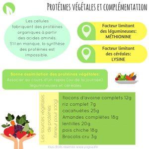 protéines végétales et acide aminé limitant