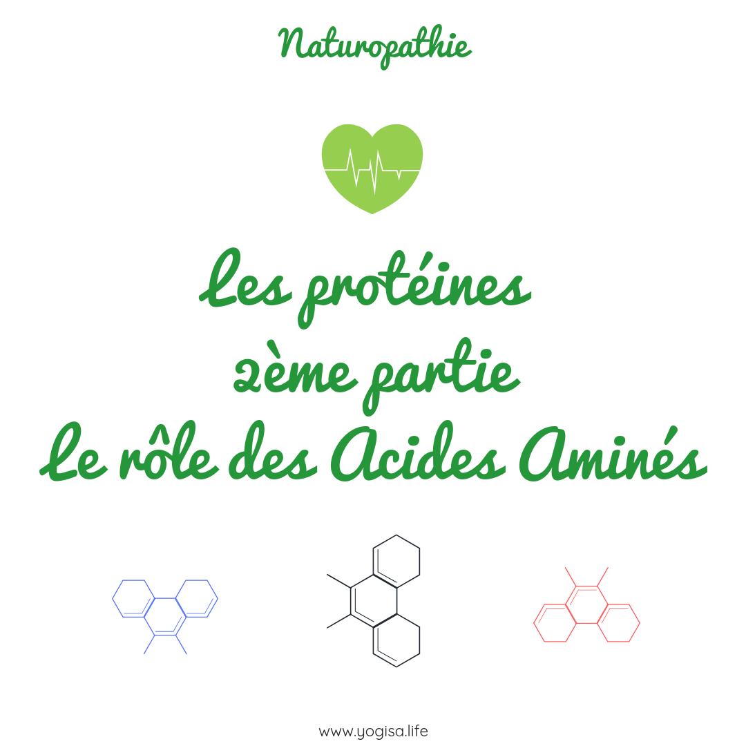 Acides aminés rôle et sources alimentaires